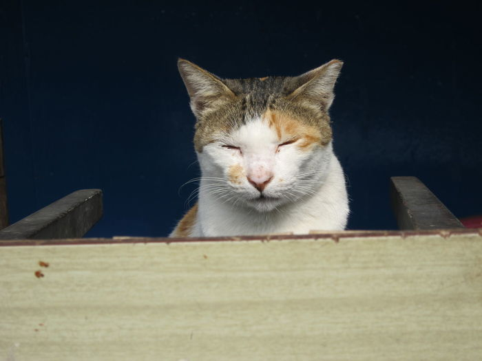 Cat Cat Lovers Cat Photography Cat Watching Day Domestic Animals Domestic Cat No People One Animal Stray Cat at Tai O 大澳 in HongKong 香港