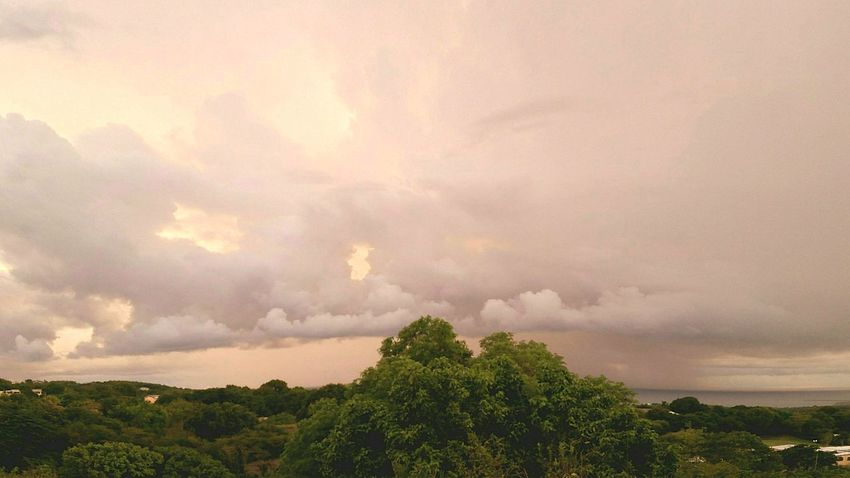 Early Morning Clouds And Sky Trees Landscape Wide Angle St.Croix, US Virgin Islands