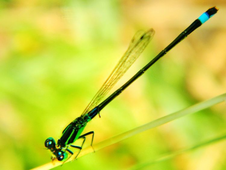 Focal length: 23.2 mm, ISO: 80, NikonCoolpixL120 Showcase: December Damselfly Series: Damselfly Insects  AMPt - LOVE Beauty Redefined No People AMPt - Memory Capturing Freedom End Of Summer Urban Gardening The Places I've Been Today Shootermag Colors Of Autumn Eye4photography  Me, My Camera And I A Moment Of Zen... The Best From Holiday POV NEM Still Life Adventures Beyond The Ultraworld Macro EyeEm Best Shots Shades Of Blue Pattern, Texture, Shape And Form Minimalism