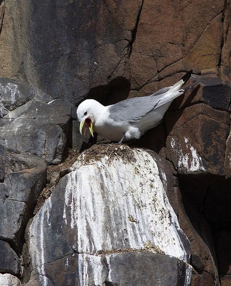 High angle view of seagull perching on rock