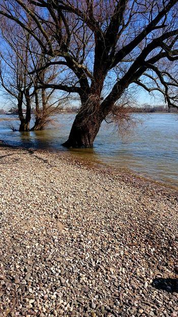 View Nature Rheinufer Underwater Tree