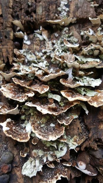 Mushroom Nature Pilz Hongos  Brown