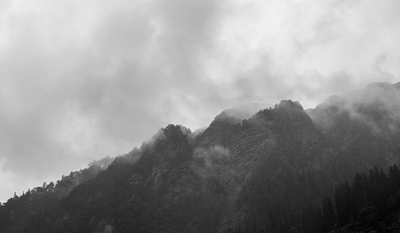 Foggy Mountain in black and white Tree Scenics - Nature Cloud - Sky Beauty In Nature Mountain Sky Tranquility Forest Fog Nature No People Tranquil Scene Environment Non-urban Scene Day Outdoors Low Angle View Land WoodLand Pine Tree Pine Woodland Coniferous Tree India Fuji Xt20 Blackandwhite