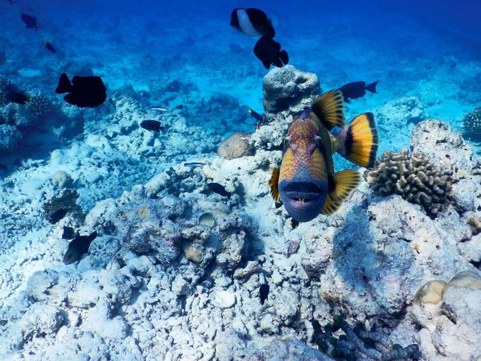 Smile Smile Please Underwater Sea Water Animal Wildlife UnderSea Animals In The Wild Sea Life Animal Swimming Animal Themes Marine Fish Coral Beauty In Nature Outdoors No People Nature