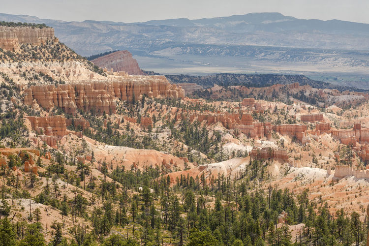 Panoramic view of Bryce Canyon, Utah Bryce Canyon Landscape_Collection Nature Nature Photography Panorama Panoramic USA Utah America Beauty In Nature Bryce Canyon National Park Day Landscape Mountain Mountain Range Nature No People Outdoors Physical Geography Scenics Sky Tranquil Scene Tranquility Travel Destinations Tree