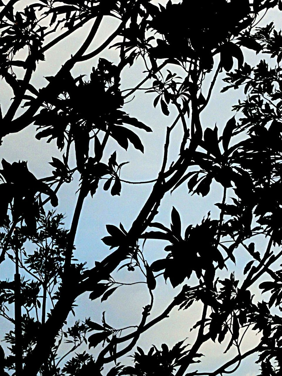 silhouette, tree, low angle view, nature, branch, leaf, no people, growth, beauty in nature, outdoors, day, bird, sky