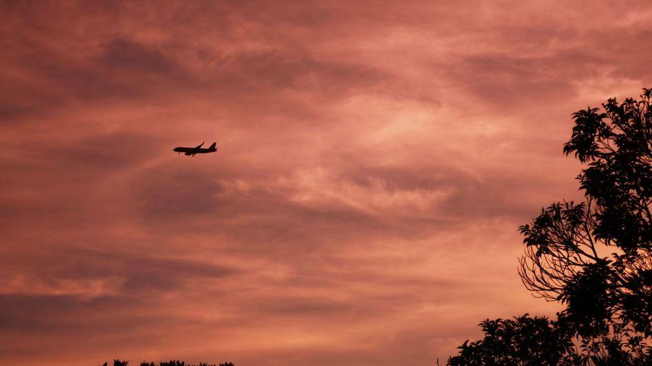 体力の限界……今週の締め写真はコレ♪σ(^◇^;) Sunset EyeEm Best Shots - Sunsets + Sunrise EyeEm Best Edits EyeEm Best Shots Sky And Clouds Sunset Silhouette Airplane Silhouette_collection シルエット部 Sunset Silhouettes