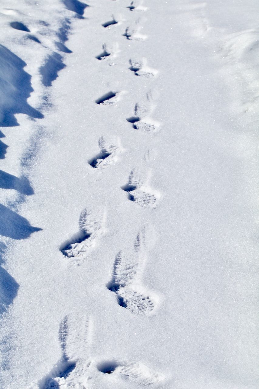 HIGH ANGLE VIEW OF FOOTPRINT ON SNOW COVERED FIELD