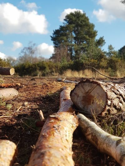Woods in transition Wood WoodLand Woods Outdoors Outdoor Photography Outside Photography Yateley Common Tree Sky Close-up First Eyeem Photo Tree Trunk Bark Tree Ring Log Forestry Industry