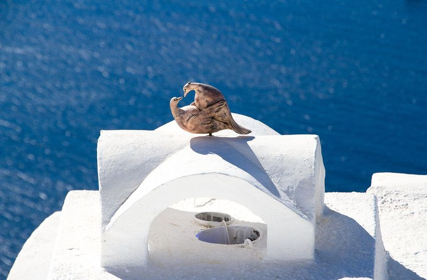 Bluesky Doves Greece Love Relaxation Romanitic Santorini, Greece Seaview Vacation