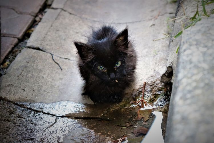 Angry Looks Alone Angry Black Cat EyeEmNewHere Abandoned Cat Domestic Cat High Angle View Looking At Camera No People One Animal