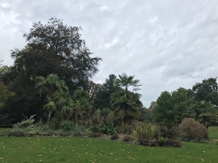 Batterseapark Battersea Batterseapark Uk England Tree Plant Sky Cloud - Sky Growth Nature No People Beauty In Nature Day Tranquility Green Color Field Outdoors Tranquil Scene Land Park - Man Made Space Grass Park Scenics - Nature Idyllic