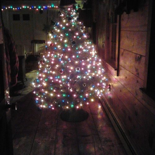 Christmas tree after we decorated it. ConcolorFir December2014