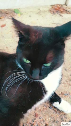 My baby Cat♡