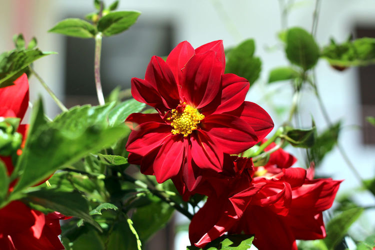Red flower and