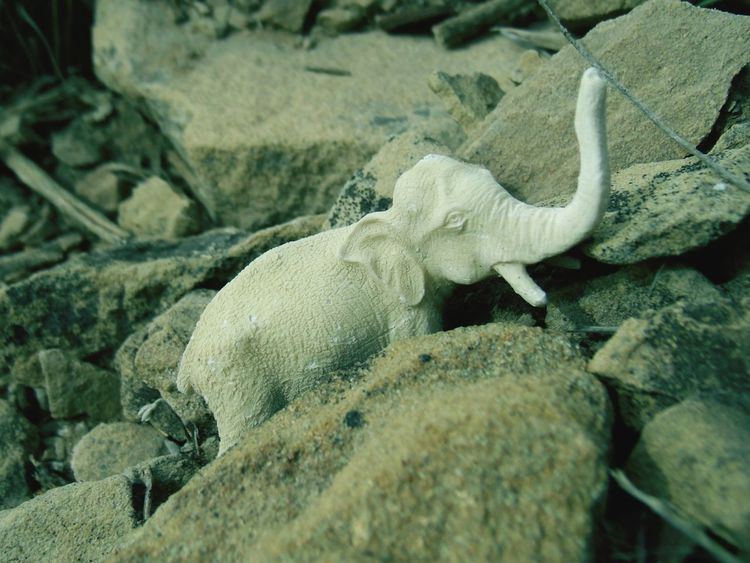 Elephant Lost Lost Toy