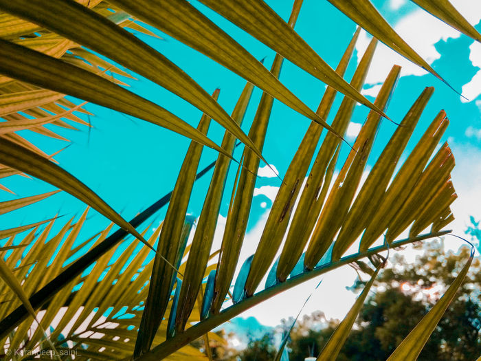 Low angle view of palm leaf against blue sky