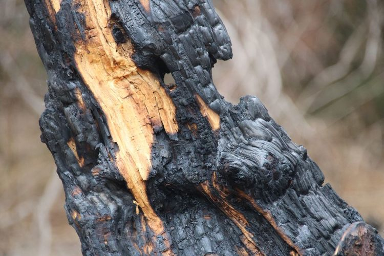 Charred tree Fire Damage Charred Tree Burned EyeEm Selects Tree Trunk Trunk Tree Focus On Foreground Close-up Day Nature No People Textured  Plant Outdoors Wood - Material Branch Growth Land Rough Wood Plant Bark Pattern Brown