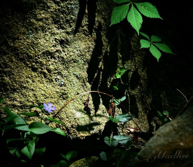 Darkness And Light Floral Shadows Cheekwood Garden Light And Shadow Madlovphotos Madlovphotography EyeEm Best Shots EyeEmBestPics