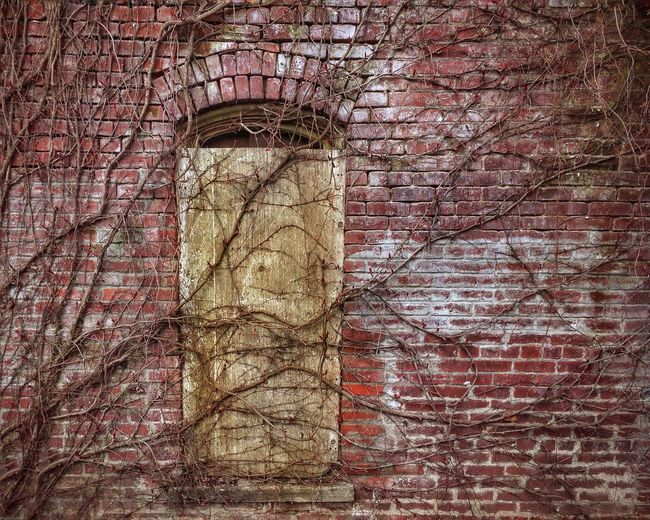Architecture Built Structure Building Exterior No People Abandoned Brick Wall Vines On Wall Vines On Brick Wall Leafless Vines On Wall Old Brick Building Old Bricks