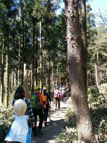 대한민국 Travel Photography Travel 한라산  Hallasan Mount Hallasan Mountain Hiking Spring Nature Korea South Korea JEJU ISLAND  Jejudo Jeju 제주도