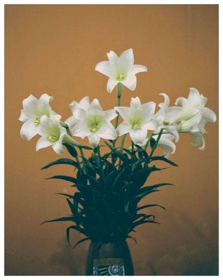 Lily, April Lily Whitelily April April2018 Lovelily Flower Head Vase Close-up Plant