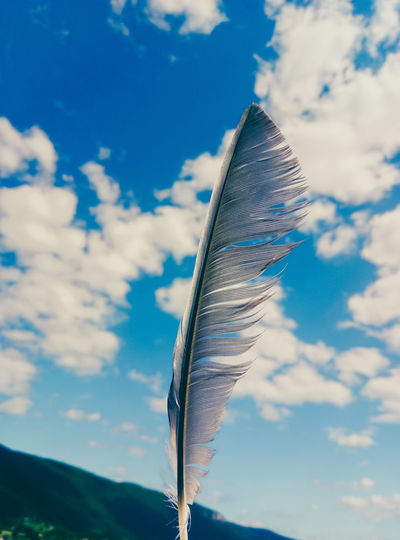 Low angle view of feather against sky