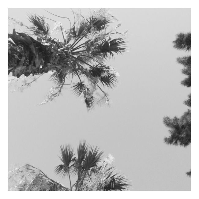 Looking sky EyeEm Best Shots EyeEmNewHere EyeEm Selects Palm Tree Outdoors Blackandwhite Breathing Space The Week On EyeEm