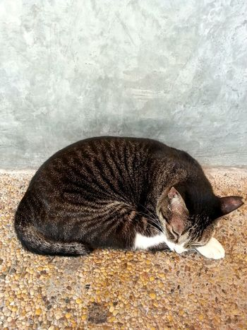 Dont disturb please!!! Catlovers Lazyday Zzz Catcollection