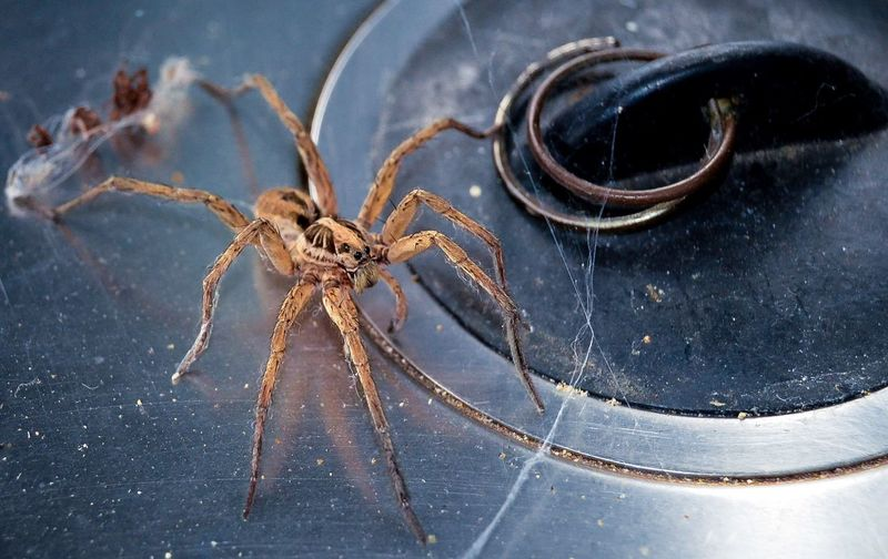 Spider Animals Wildlife From My Point Of View Nature EyeEm Nature Lover Photography Eye4photography