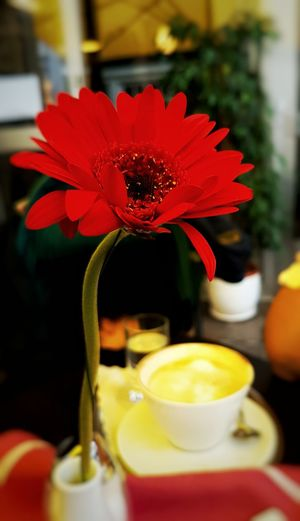 Gerbera Red Gerbera On The Table Coffee ☕ Coffee And Sweets Milk Coffee