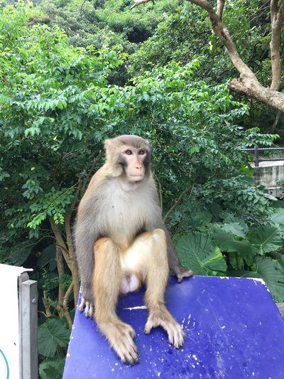 Monkey Old Monkey Old Monkey Teddy