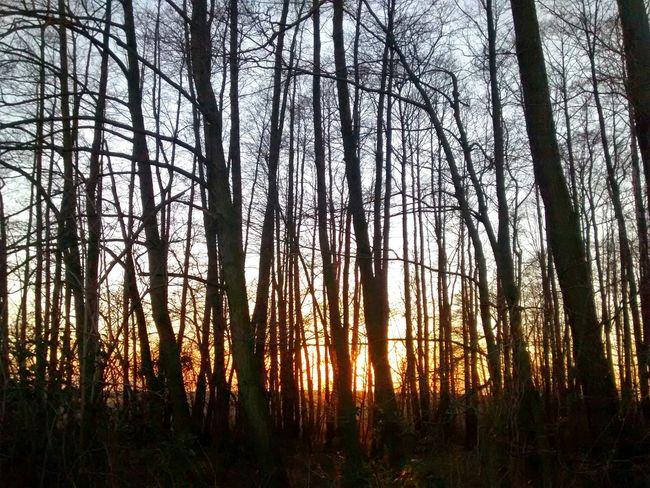 Nature Eyemnaturelover Woods Trees Sunset Poland Beauty Dark Nofilter Countryside