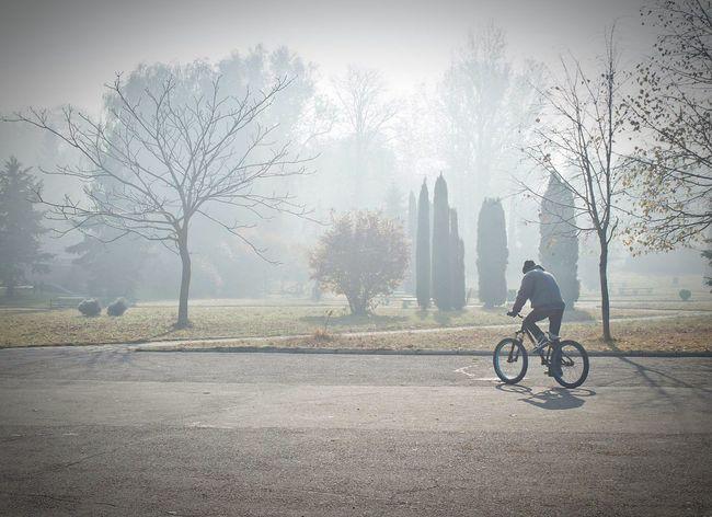 Foggy Morning Fog Foggy Morning Park Bike Bike Rider Morning Autumn Misty Morning Man Bicycle Boy