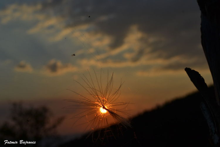 Sunset behind ... Back Lit Beauty In Nature Close-up Field Focus On Foreground Glowing Growth Low Angle View Nature No People Orange Color Outdoors Scenics Silhouette Sky Sun Sunlight Sunset