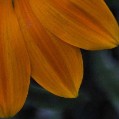 Prescottpark portsmouthnh Summerafternoon Orange petal flower closeup park