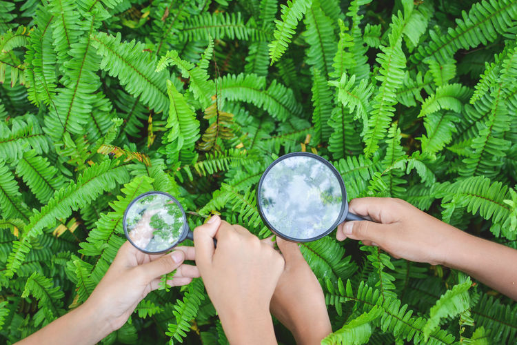 Cropped hands of female friends holding magnifying glass over plants