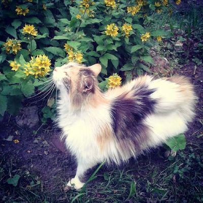 Без кота и жизнь не та! А я сегодня инстаспаммер:)