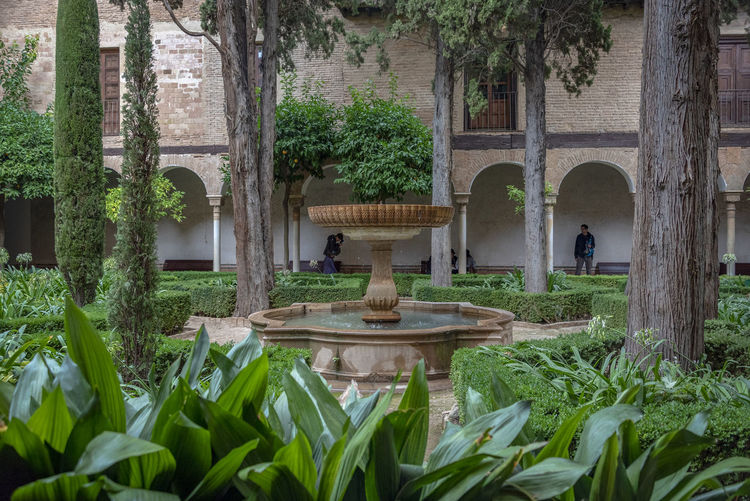 interior of Alhambra, Granada, Spain Alhambra Alhambra De Granada  Interior Spain Architecture SPAIN Arabic Style Plant Growth Architecture Tree Nature Grass Built Structure Day Water Fountain Green Color No People Front Or Back Yard Arch Garden Building Exterior Outdoors Beauty In Nature Leaf Architectural Column