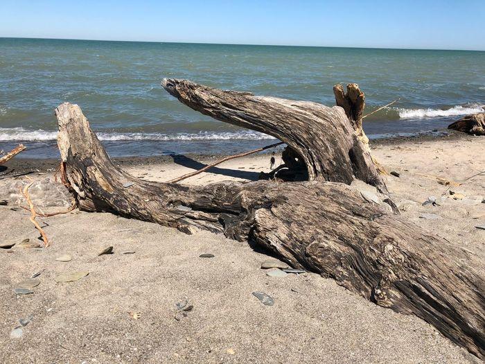 Beach day EyeEm Selects Water Beach Land Horizon Over Water Horizon Sand Driftwood Nature