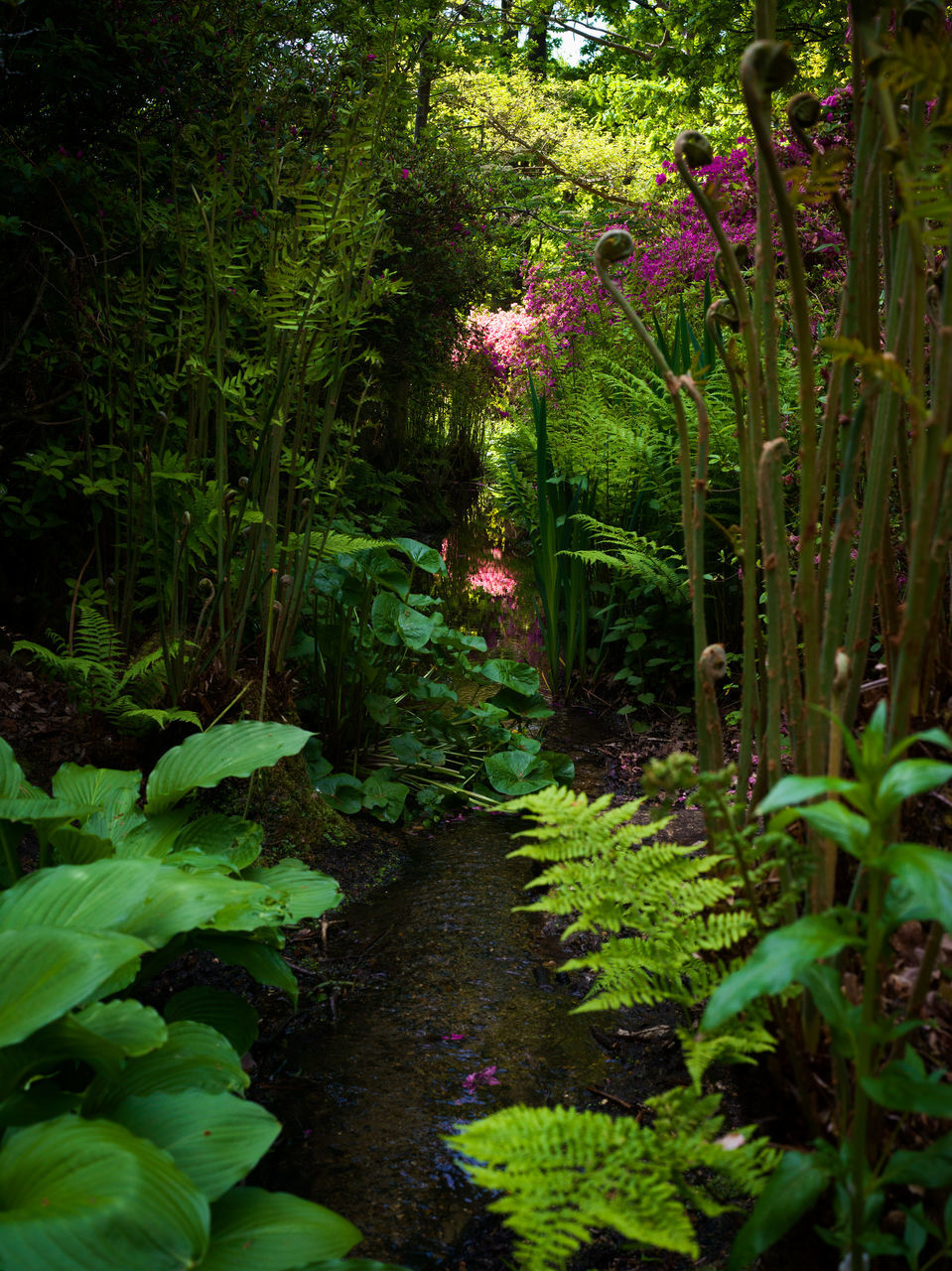 growth, nature, tranquility, plant, beauty in nature, foliage, outdoors, forest, no people, scenics, botanical garden, flower, day, tree