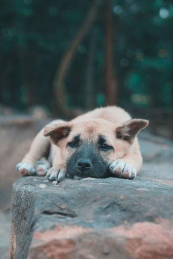 Close-Up Of Dog Sleeping On Wood