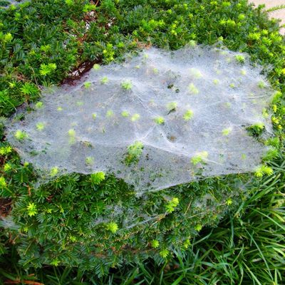 Wait.....that wasn't there yesterday 🤔 Spider Web Bush Growth Green Color Nature Day High Angle View Beauty In Nature Close-up Outdoors