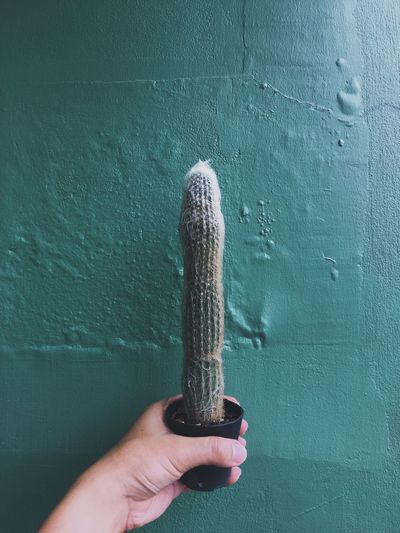 Close-up of human hand holding potted plant against wall