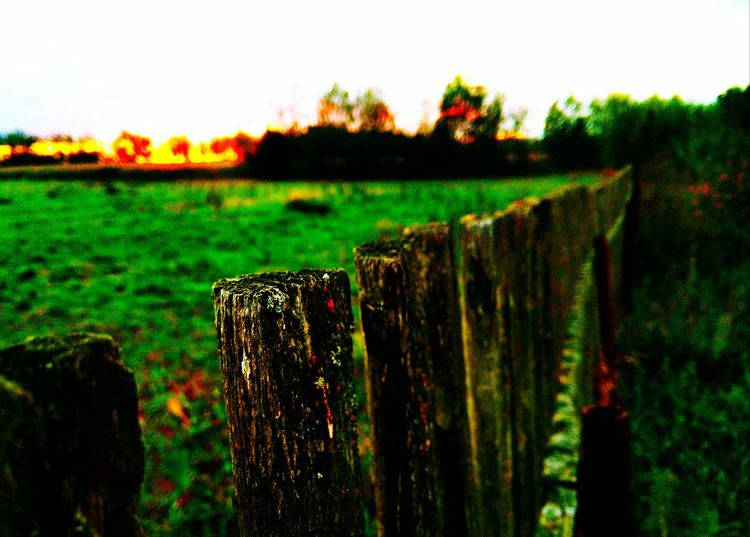 Fence Wooden Post Protection Field Safety Focus On Foreground Landscape Close-up Tranquil Scene Sky Tranquility Barbed Wire Rural Scene Scenics Wooden Farm Agriculture Nature Growth Beauty In Nature Best Eyeem Shots First Eyeem Photo Best EyeEm Nature Best Eyeem Photo EyeEm Best Shots - Nature