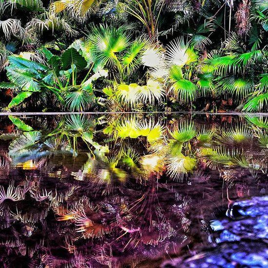 J U N G L E 💦🌴🍃💦 Nikonfr NikonD5500 Igersfrance Igersindia India Udaipur Citypalace Palace Puddle Reflection Mirror Reflect Jungle Green Picsoftheday Nature Natural IGDaily Igersoftheday Igaddict Ig_worldclub Ig_life Inde Indiapictures