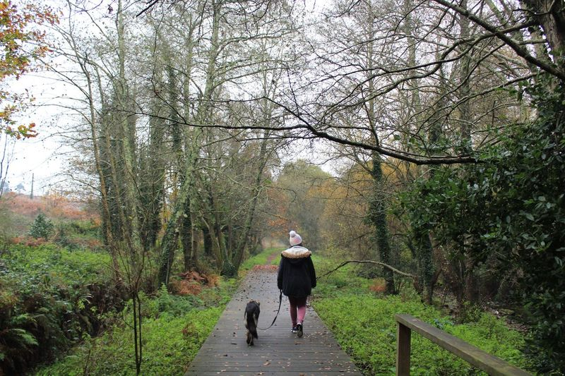 Rear view of woman walking with dog on footpath in forest