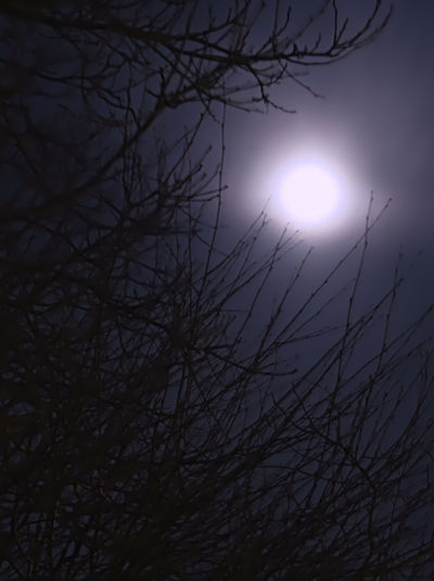 Nachtfotografie FullMoonLight Vollmond Vollmondnacht EyeEm Gallery EyeEm Nature Lover EyeEm Best Shots Astronomy Bare Tree Beauty In Nature Branch Illuminated Low Angle View Moon Moonlight Nature No People Outdoors Scenics Sky Solar Eclipse Tranquil Scene Tranquility Tree