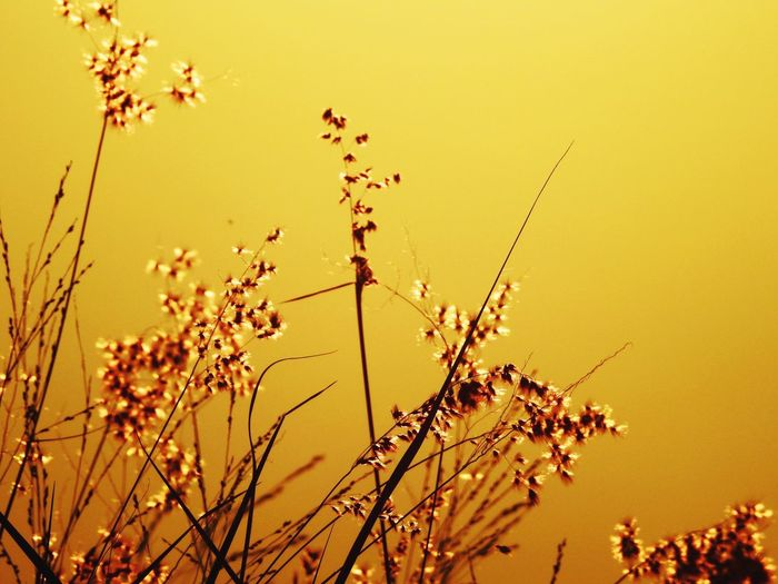 Low angle view of plants against clear sky during sunset