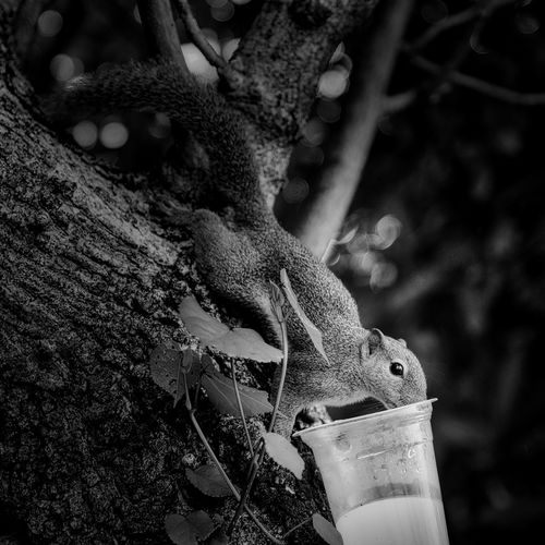 Thirsty??? Focus On Foreground Close-up Nature Fujifilm EyeEm Best Shots Fujifilm X-t20 Blackandwhite Myfujifeed Squirrel Luminar EyeEm Nature Lover X-T20 16-55